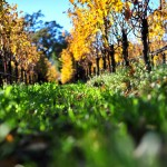 Solar Microgrid on Vineyard Can Island, Reduces Carbon Emissions